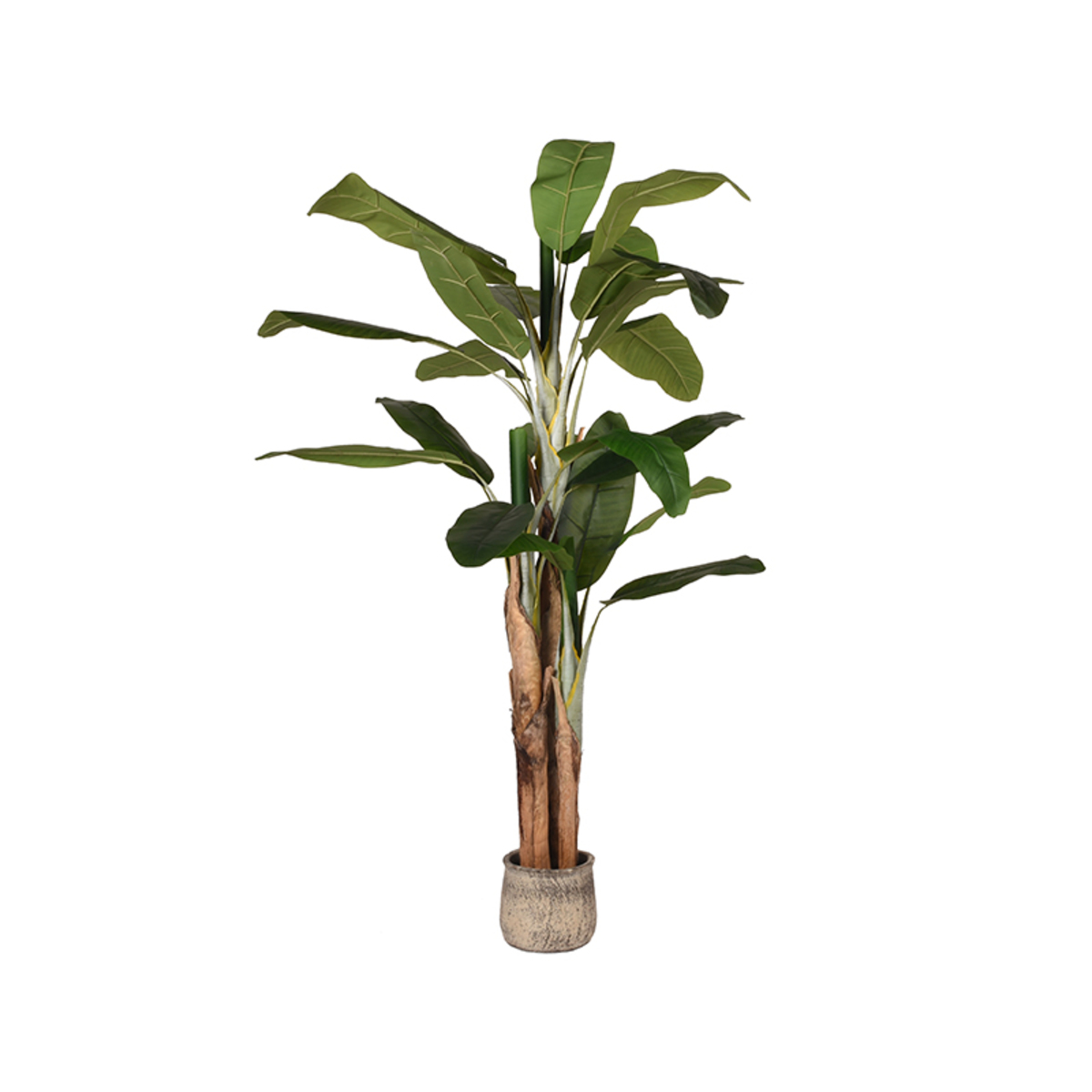 Musa - Groen - Kunststof - 180