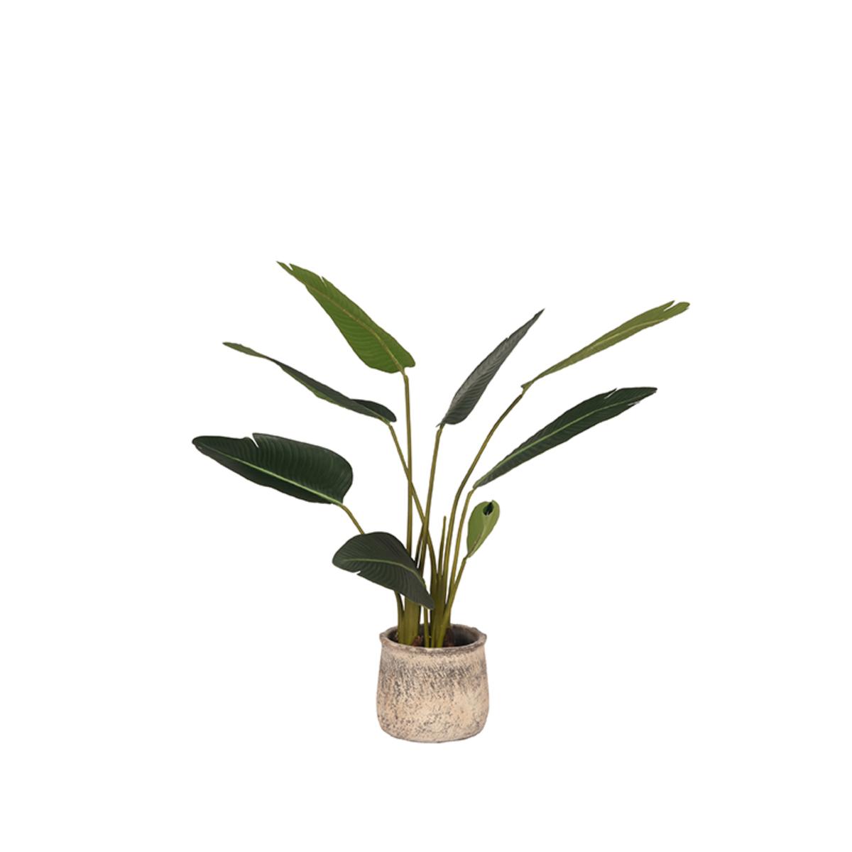 Strelitzia - Groen - Kunststof - 100 cm