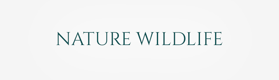 Nature Wild Life