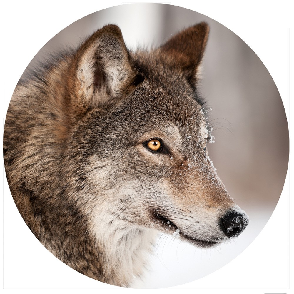 Gave special Wolf glasplaat rond