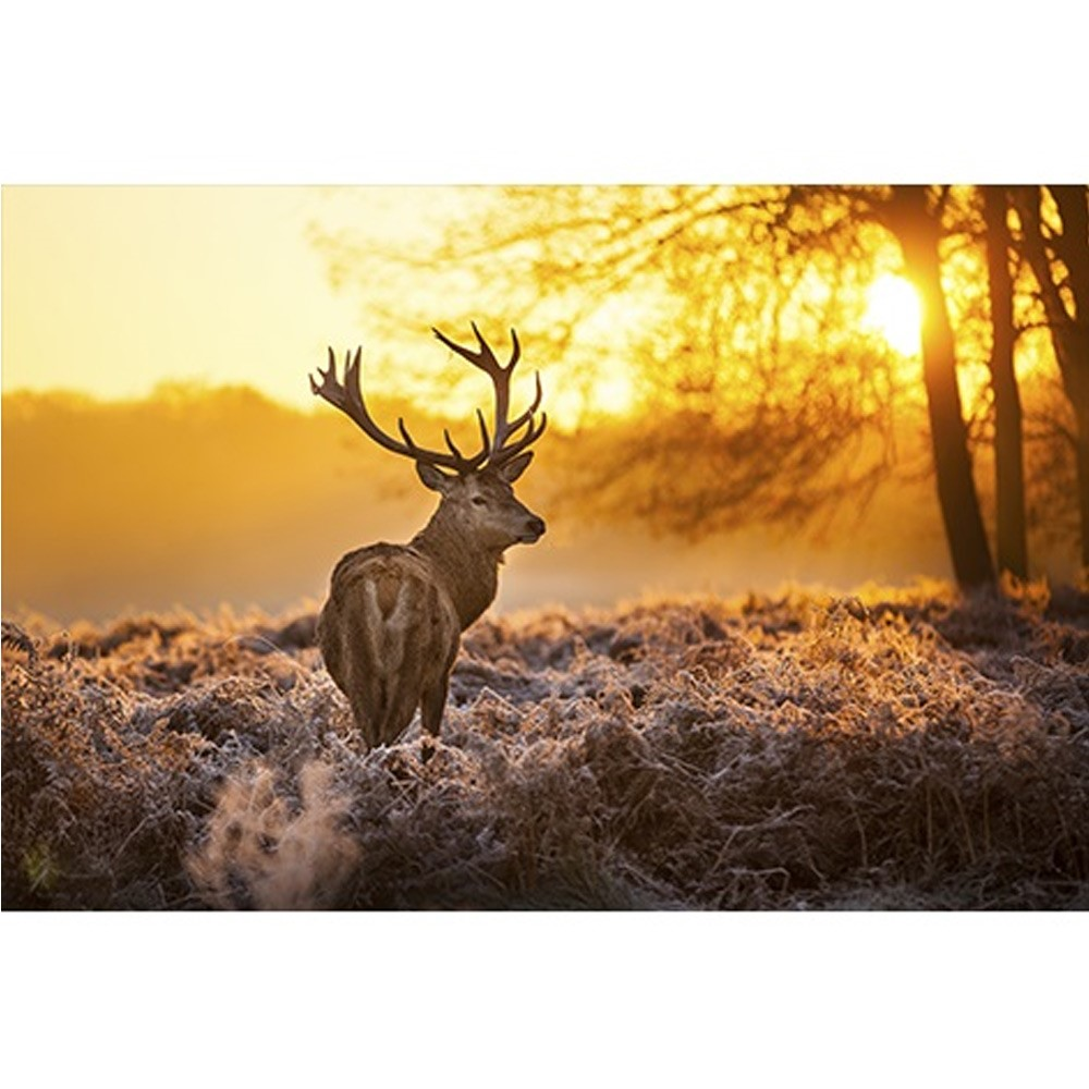 Mondiart alu Red deer in morning sun 1041710