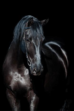 MondiArt Alu Paard zwart 1040848